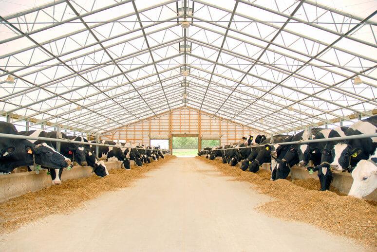 Породы коров делят на несколько видов: особенности их продуктивных качеств