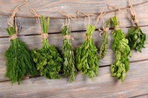 Как сушить пряные травы
