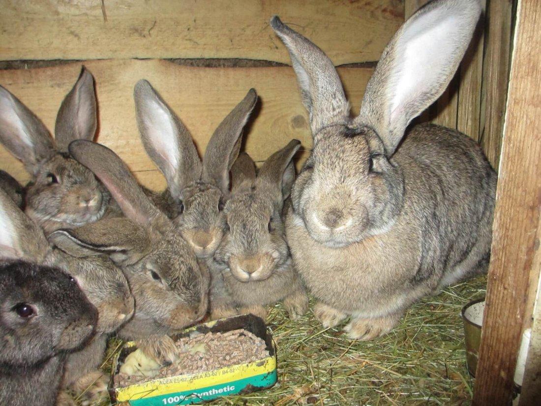 найти кроликов с фото в рязани всего покупать