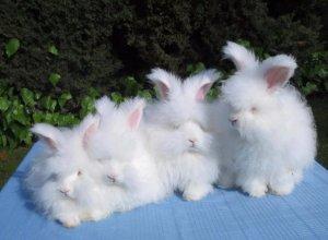 Пуховые крольчата