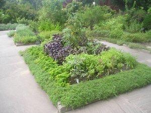 Сад с пряностями