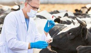 Вакцинация поголовья