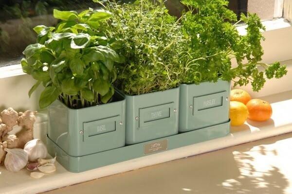 Зелень на подоконнике