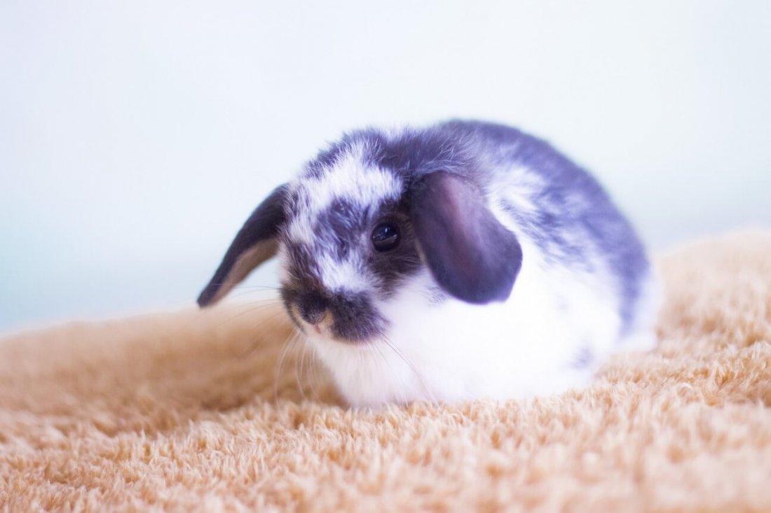 Чем болеют декоративные кролики