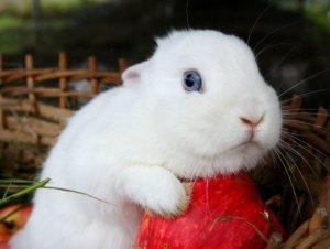 Кролик потерял аппетит