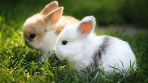Декоративные кролики: уход и содержание