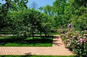 Ландшафтный дизайн с плодовыми деревьями
