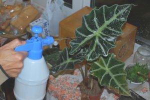 Обработка листьев мыльным раствором