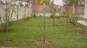 Планировка плодового сада: подготовительные работы, разделение зон