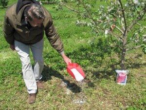 Подкормка яблони летом