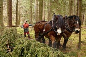 Рабочие лошади