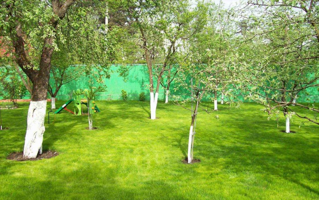 Размещение деревьев