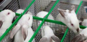 Разведение кроликов для бизнеса