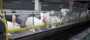 Разведение кроликов как бизнес: идеи заработка на домашнем подворье