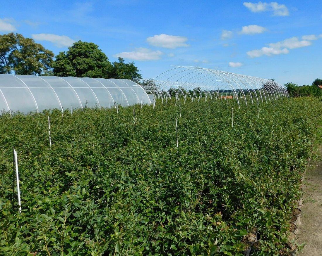 Плодовые сады бизнес планы бизнес идея с гипсом