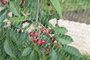 Сеть садовая на плодовом дереве