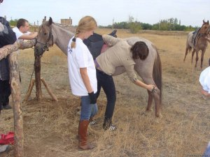 Чистка лошади