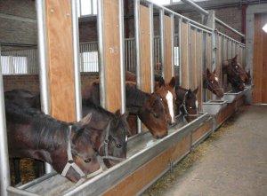 Кони в стойлах