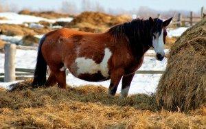 Кормление лошади зимой