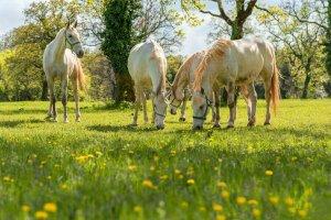 Лошади на пастбище весной