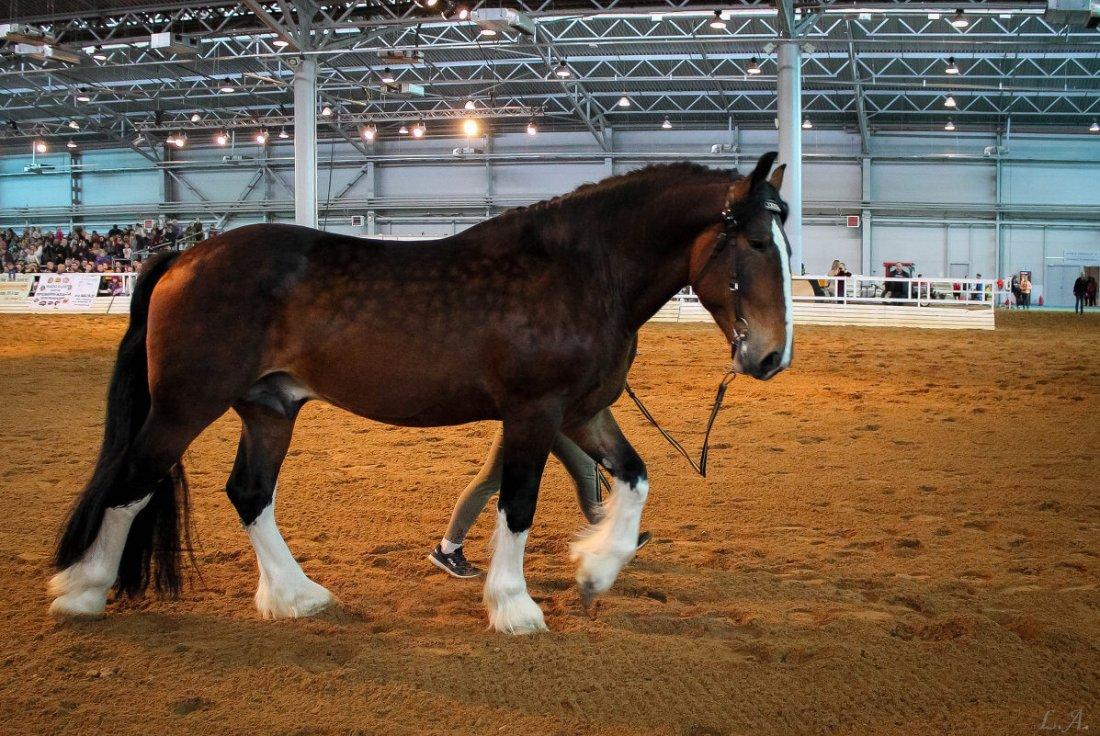 Объезженная лошадь