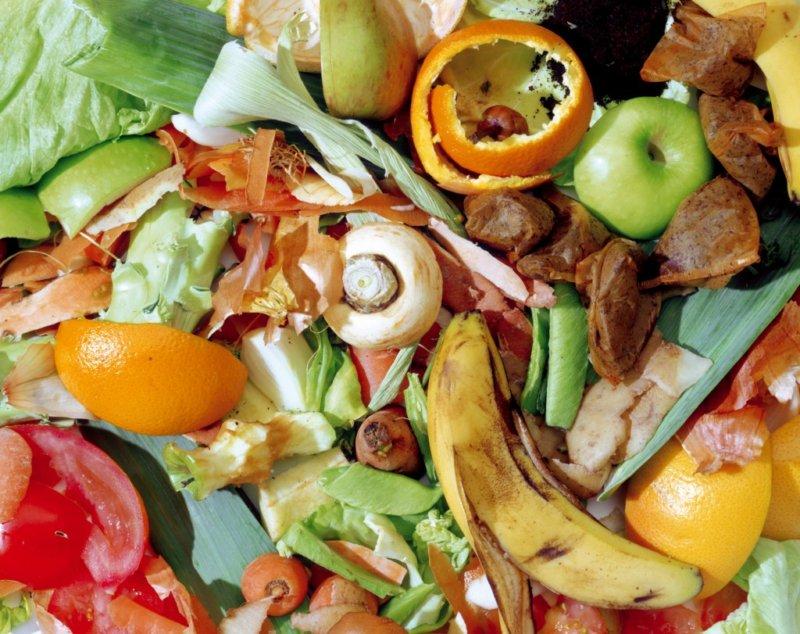 Овощи и грибы в рационе свиней