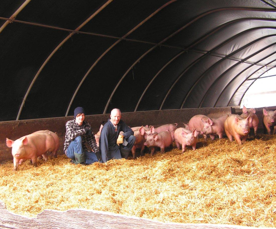 Подстилка для свиней по канадскому методу