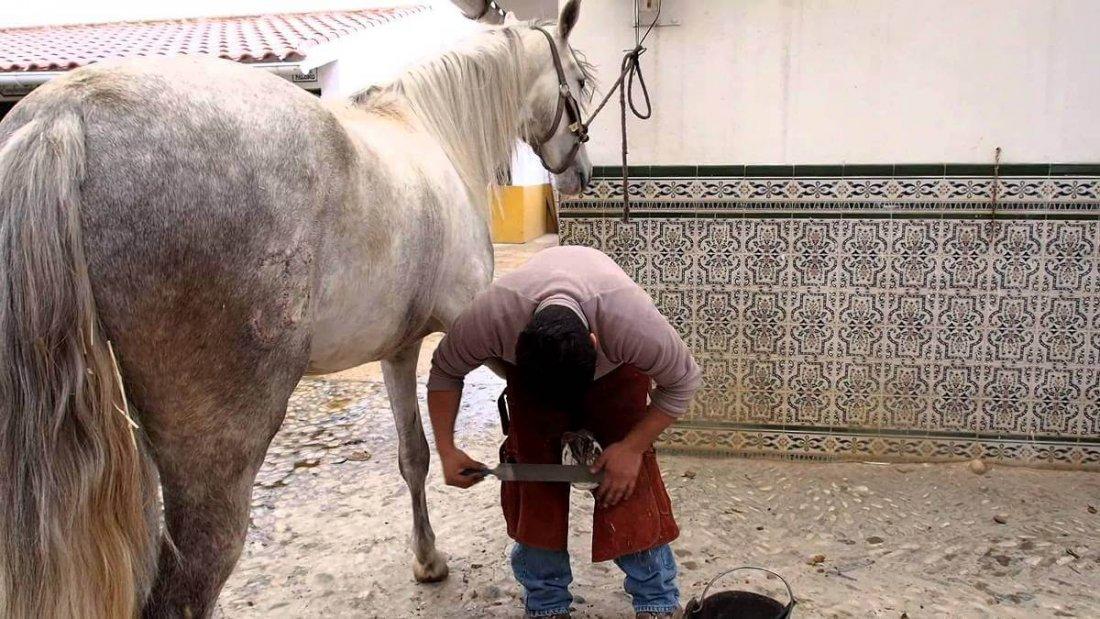 Правильная подковка лошади