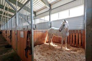 Содержание лошади