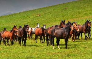 Табун лошадей на выпасе