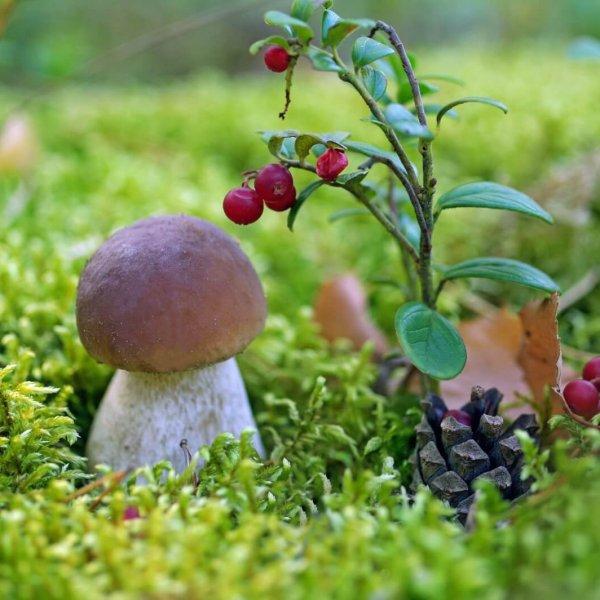 Подножный корм в лесу