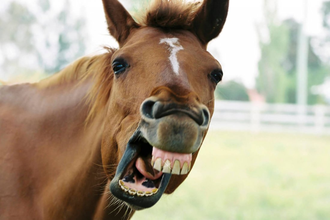 Бешенство лошади