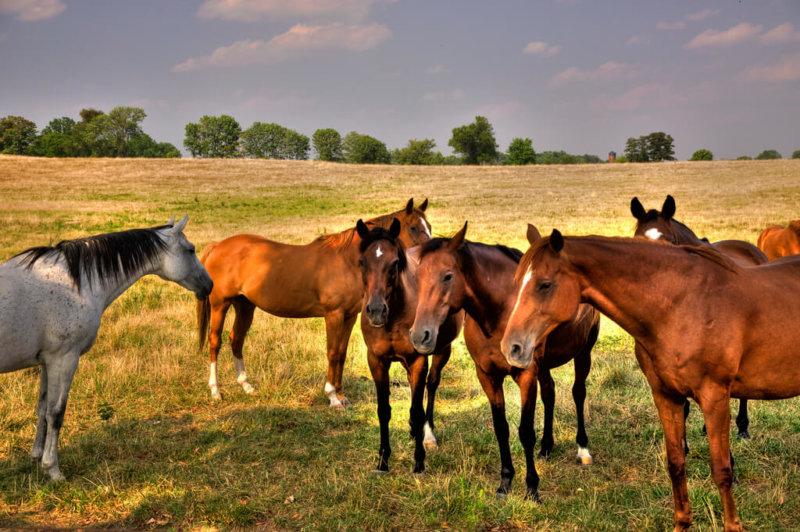 Бизнес на лошадях