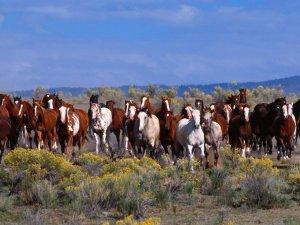 Развитие коневодства: селекция и требования к содержанию животных
