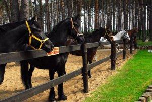 Бизнес план конного клуба: основы стратегии, перспективные цели
