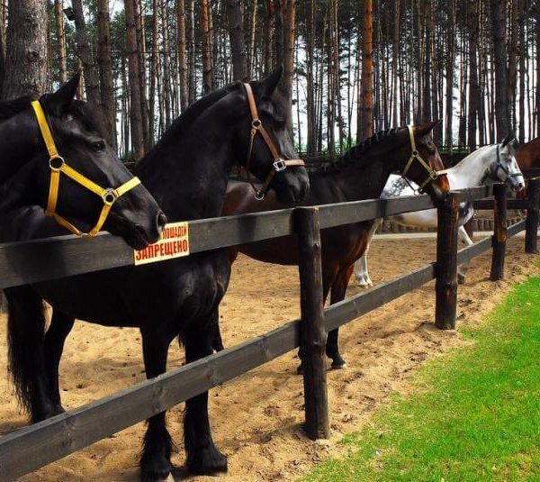 Бизнес план конный бизнес план изготовления венков
