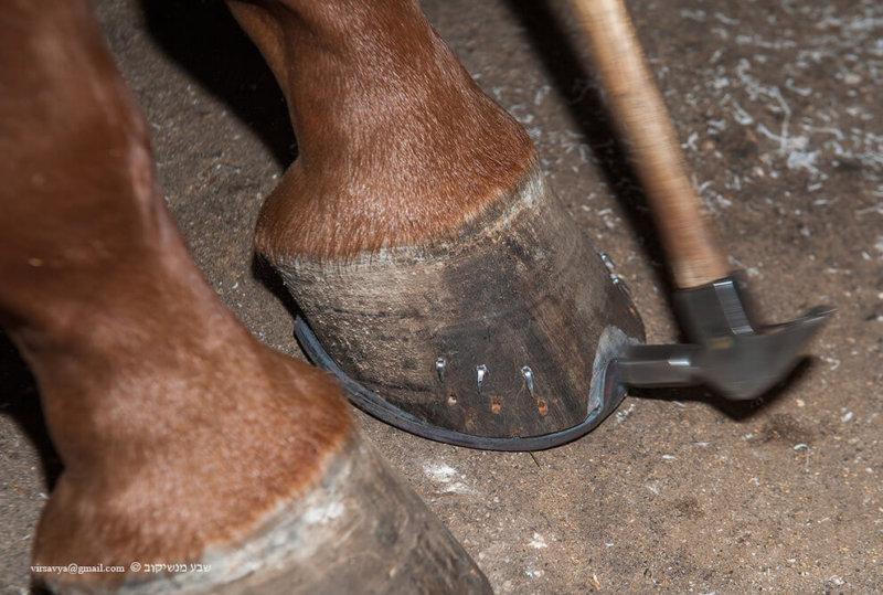 Ковка лошадей
