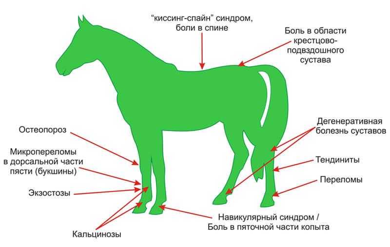 Ножные болезни у лошадей