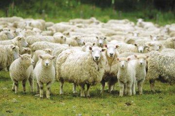 Продажа бизнеса животноводства овцеводство разместить объявление в газете алматы