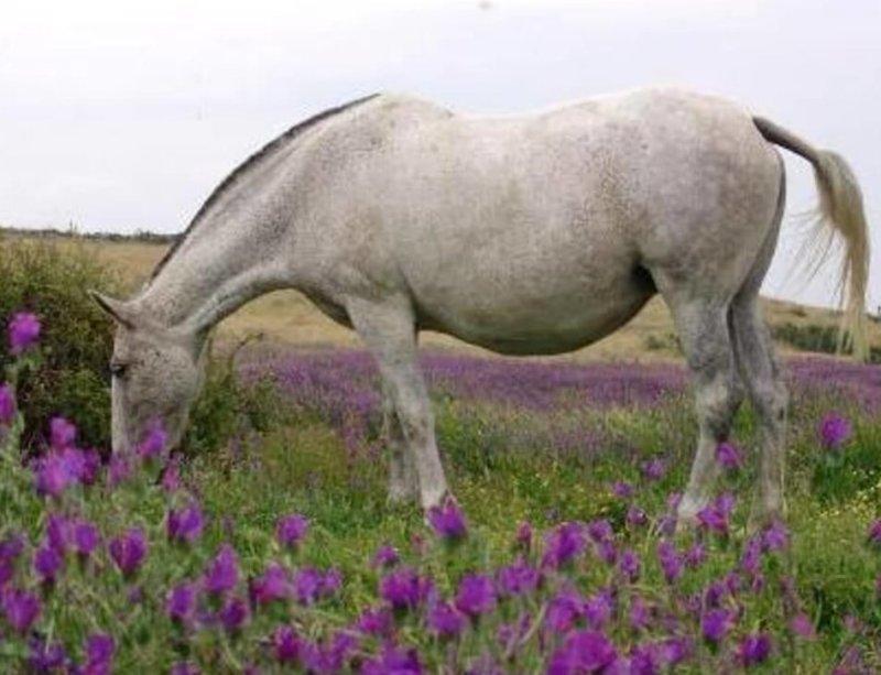 Рацион беременной лошади
