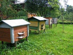 Разведение пчел на даче