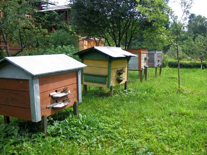 Все про пчеловодство для начинающих: как обойти подводные камни