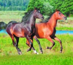Инфекционные болезни лошадей: перечень и симптомы