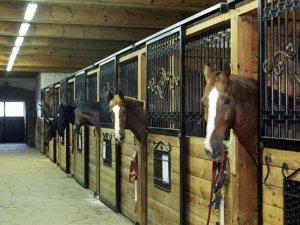 Стойловое содержание лошадей