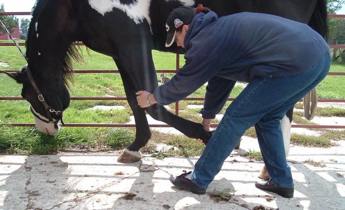 Травма ноги у лошади