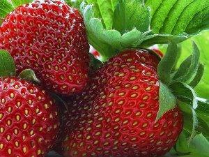Земляника: как вырастить из семян дома и какие сорта предпочесть