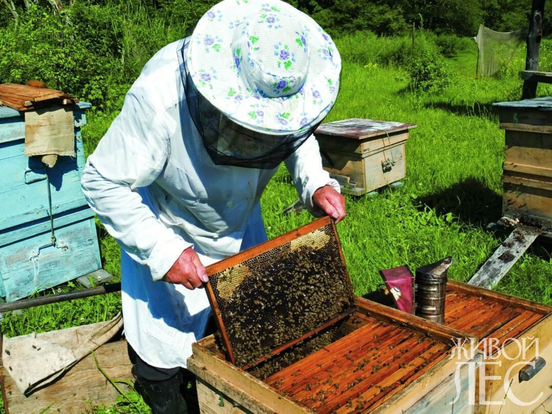 Как начать пчеловодство с нуля: организация работ