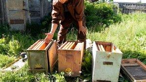 Ловушки для бродячих пчелиных роев