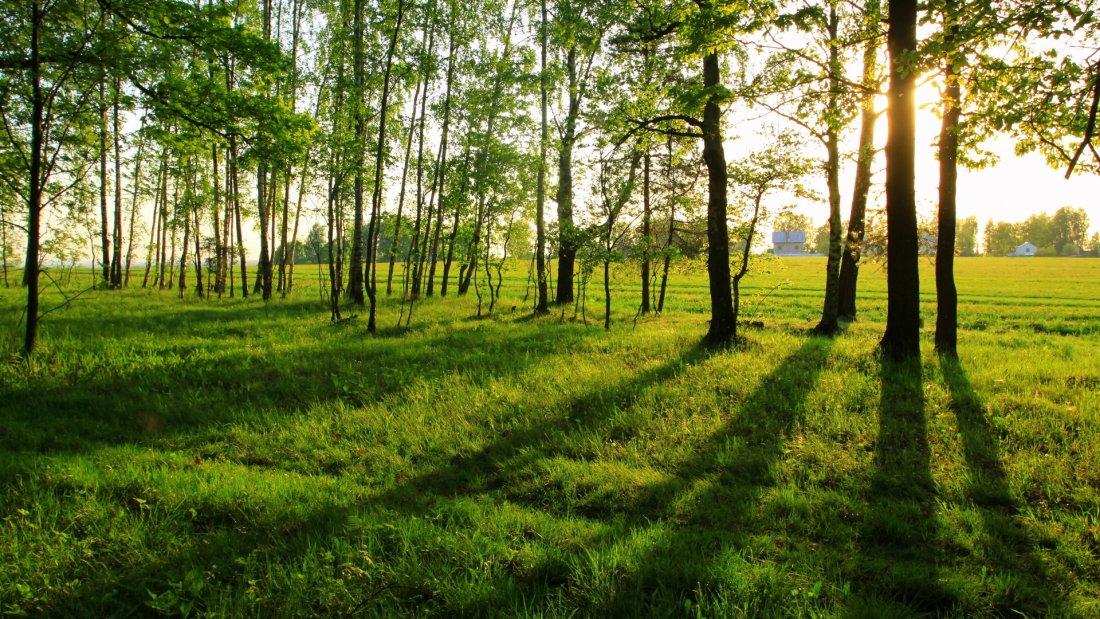 Опушка леса - излюбленное место пчел