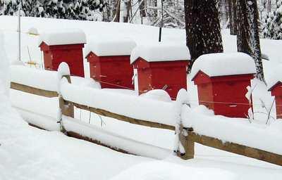 Как кормить пчел зимой: когда и что едят пчелы в холодное время
